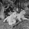 HUB et les lions de Casela