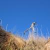 Rencontre avec les lémuriens dans la parc national d'Isalo