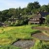 Rizières du Four Season Chiang Mai