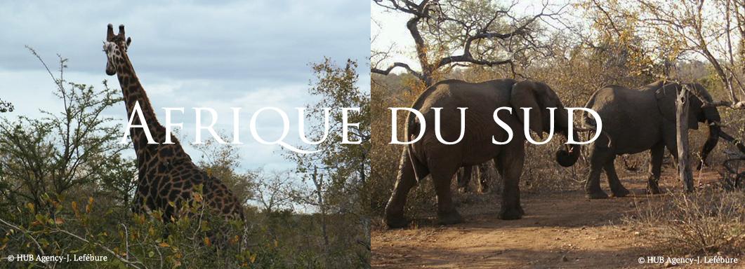 Safari Afrique du Sud lion elephant rhinocéros lodge