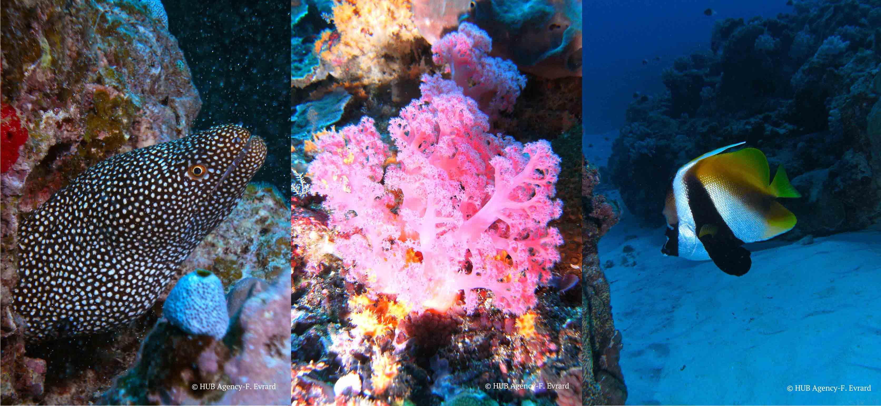 Plongée Diving Padi Scuba Poisson Murène poisson scorpion lionfish corail Iles Maldives Bali Maurice Madagascar Mexique Caraïbe Tahiti